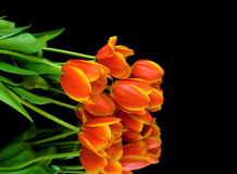 Bouquet of tulips on a black background Stock Photo