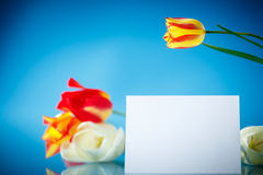 Bouquet of tulips with a blank Royalty Free Stock Photography