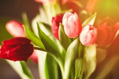 Brighten up your day with flowers. Bouquet of tulips in bloom - mothers day, springtime and international womens day concept. Brighten up your home with flowers stock photo