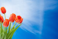 Bouquet of tulips on the blue sky background With Copy Space Free Text Or Your Text Here Stock Photo