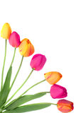Bouquet of tulips border or frame Royalty Free Stock Images