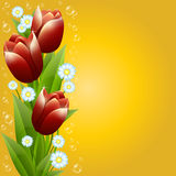 Bouquet of tulips and camomiles Stock Images