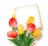 Bouquet of tulips with a card inside. Space for text. Holiday background with sheet of paper and flowers. Vector Royalty Free Stock Images