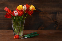 Bouquet of tulips with clippers Royalty Free Stock Image