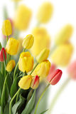 Bouquet of  tulips, copy space Royalty Free Stock Images