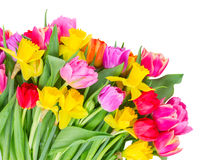 Bouquet of tulips and daffodils Stock Photo