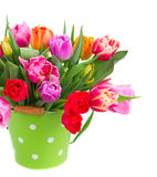 Bouquet of tulips and daffodils Royalty Free Stock Photo