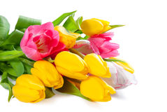 Bouquet of tulips for design Royalty Free Stock Photos