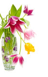 Bouquet of tulips of different colors in the vase. On a white background. Isolated Royalty Free Stock Image