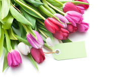 Bouquet of tulips with an empty tag Stock Photography