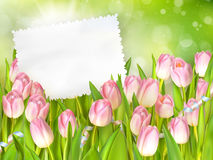 Bouquet of tulips. EPS 10 Stock Images