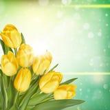 Bouquet of tulips. EPS 10 Stock Image