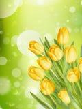 Bouquet of tulips. EPS 10 Stock Photo