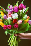 Bouquet of tulips in a female hand Stock Photography
