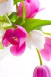 Bouquet tulips flower Stock Photos