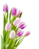 Bouquet of tulips flower Stock Photo