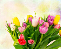 Bouquet of tulips flowers on a drawing background vintage retro Royalty Free Stock Photos