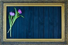 A bouquet of tulips in a frame for paintings on a black background stock illustration