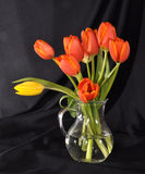 Bouquet of tulips in a glass vase Stock Image