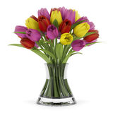Bouquet of tulips in glass vase isolated on white Stock Photos