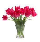 Bouquet of tulips in glass vase isolated on white background Stock Image