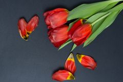 A bouquet of tulips on a gray background with petals stock photo
