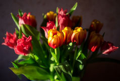 Bouquet of tulips Royalty Free Stock Photos