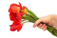 Bouquet of tulips in a hand Stock Image