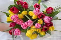 Bouquet of tulips in the hands of the girl. Many red, pink, yellow tulips royalty free stock photos