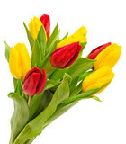 Bouquet of tulips isolated Royalty Free Stock Images