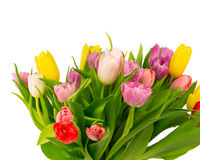 Bouquet of tulips isolated on white background. Selective soft focus toned photo Stock Photo