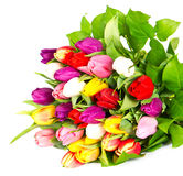 Bouquet of tulips isolated on white Royalty Free Stock Photography