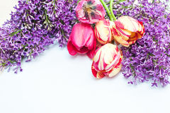 Bouquet of tulips and lilac on a white background Stock Image