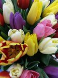 Bouquet of tulips. Many bright colorful tulips in a spring bouquet Royalty Free Stock Photography