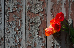 Bouquet of tulips and an old wooden door as  vintage background Royalty Free Stock Photo