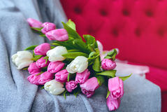 Bouquet of tulips with pink ribbon on gray blanket. Bouquet of pink and white tulips with pink ribbon on gray blanket at pink sofa royalty free stock photos
