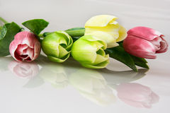 Bouquet of tulips with reflection Royalty Free Stock Images