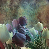 Bouquet of tulips on shabby grey background Stock Images