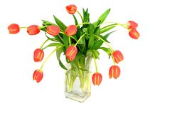 Bouquet of tulips in vase Royalty Free Stock Image