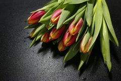 Bouquet of tulips with water drops on black background Stock Image