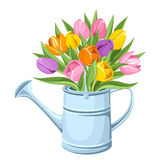 Bouquet of tulips in watering can. Vector illustration. Stock Image