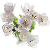 Bouquet of tulips on white Royalty Free Stock Photo