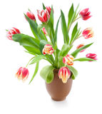 Bouquet of tulips  on white Royalty Free Stock Images