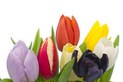 Bouquet of Tulips on white background Royalty Free Stock Photo