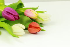 Bouquet of tulips. On white background Stock Photos