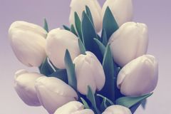 Bouquet of tulips on white background with copy space stock photo