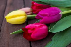 Purple colored tulip flowers on a wooden background royalty free stock images