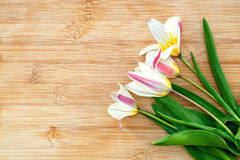 Bouquet of tulips on wooden board. Royalty Free Stock Images