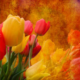 Bouquet of tulips on worn golden background Stock Image