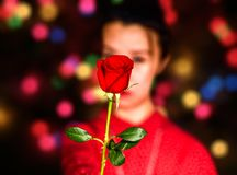 A red valentines rose holding by a girl. stock image